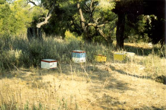 Fig. 6 Beehives in the investigation area