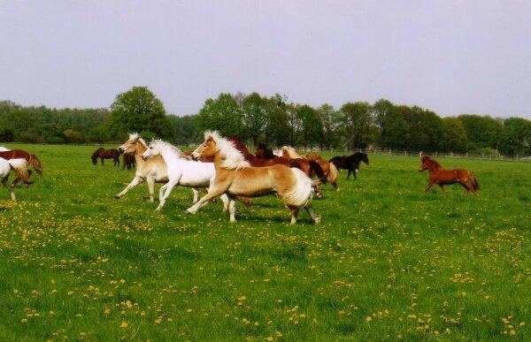 Lucky horses