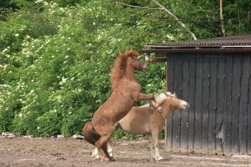 walzer-und-ein-anderes-pferd-auf-einer-koppel-14-friederike-erlinghagen-dipl-biologin-burgwedel