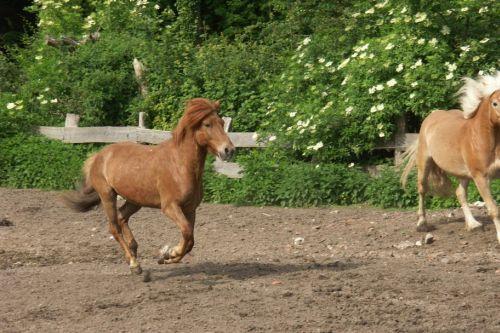walzer-und-ein-anderes-pferd-auf-einer-koppel-23-friederike-erlinghagen-dipl-biologin-burgwedel
